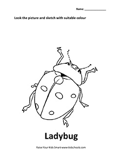 Insects Colouring Worksheet - Ladybug - Kidschoolz