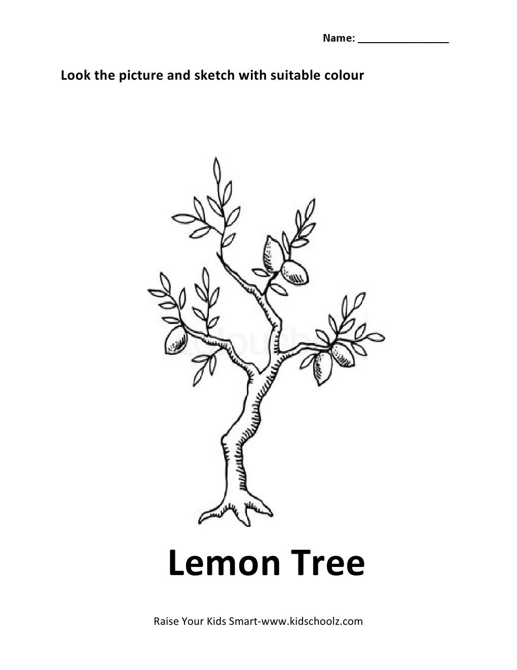colouring worksheet lemon tree kidschoolz