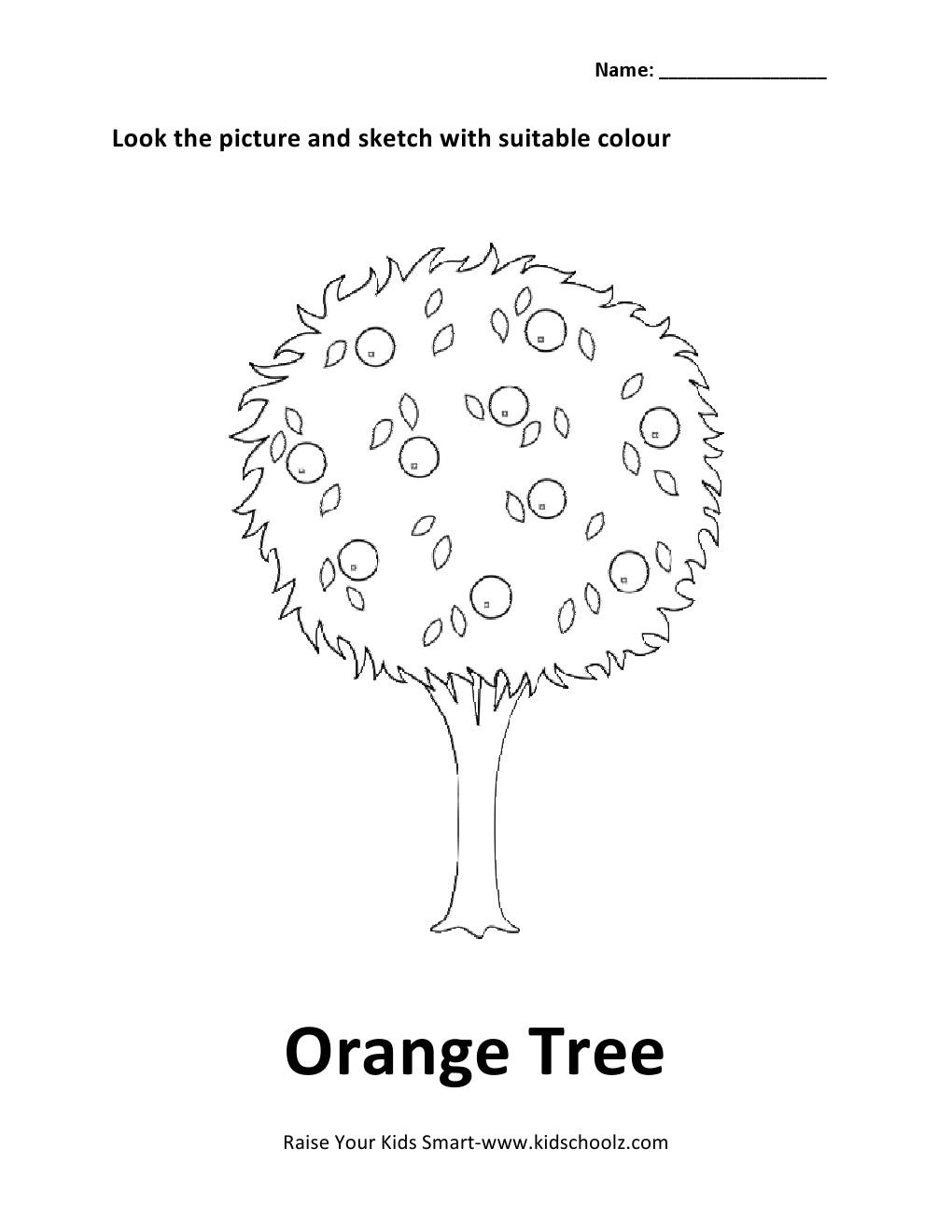 Colouring Worksheet Orange Tree KidschoolzKidschoolz – Parts of a Tree Worksheet