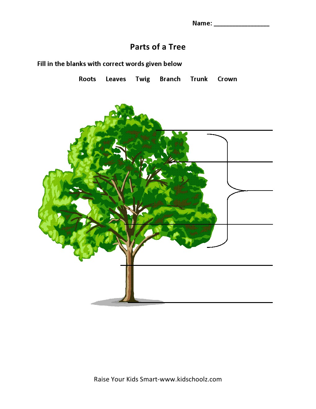 Uncategorized Parts Of A Tree Worksheet grade 2 parts of a tree worksheet 1 kidschoolz worksheet