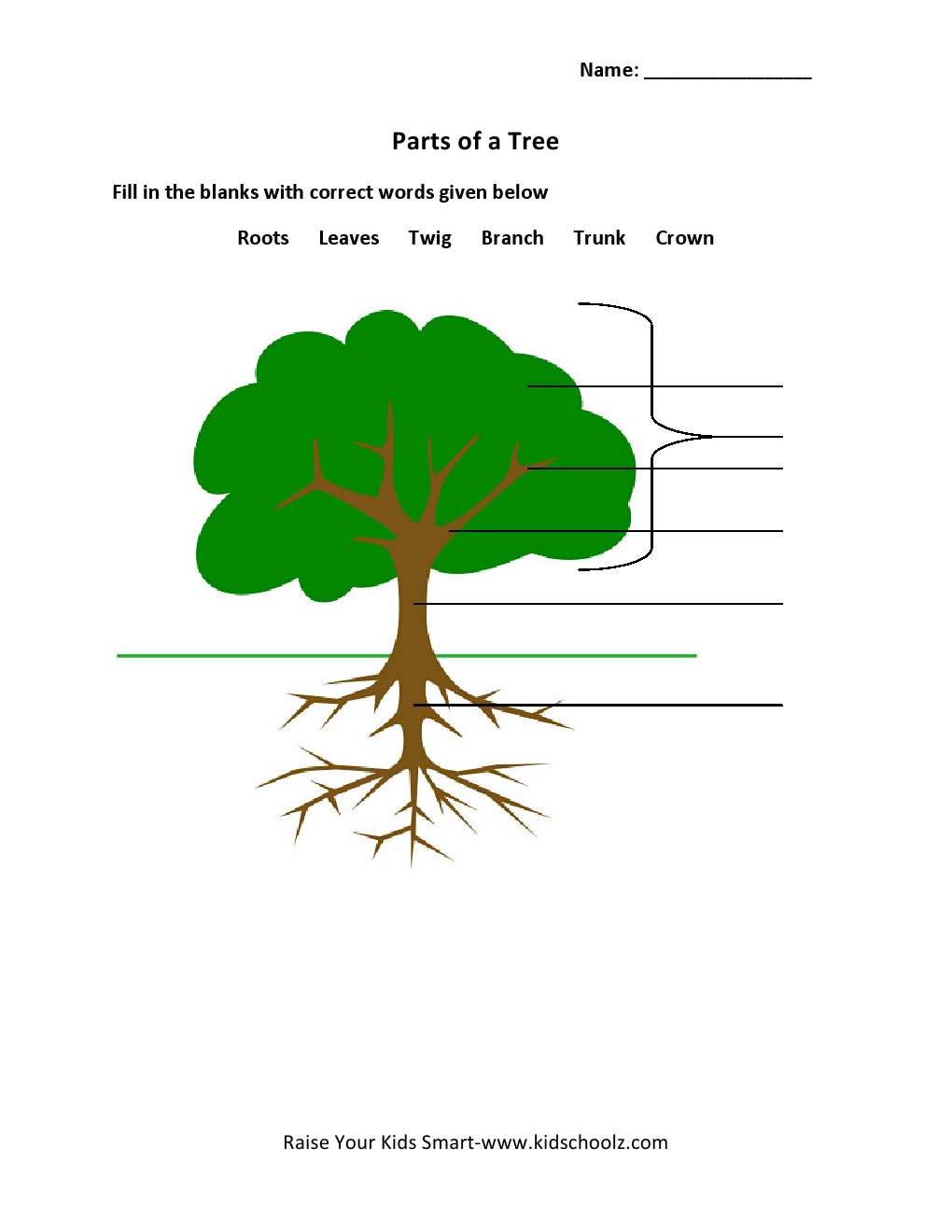 Uncategorized Parts Of A Tree Worksheet grade 2 parts of a tree worksheet 3 kidschoolz worksheet
