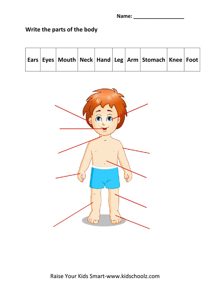 Human Body Parts Worksheets Matching Identification Worksheet